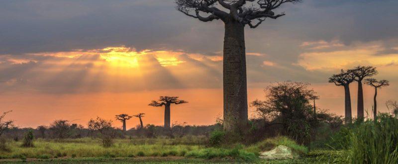 MADAGASCAR vytvořit společnost Madagaskar společnost vytvoření Madagaskar sídlo Madagaskar bankovní účet Madagaskar