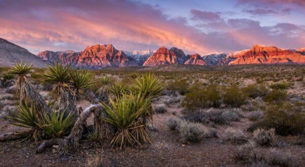 Nevada založit společnost Nevada založit společnost Nevada domiciliace Nevada otevřít bankovní účet Nevada